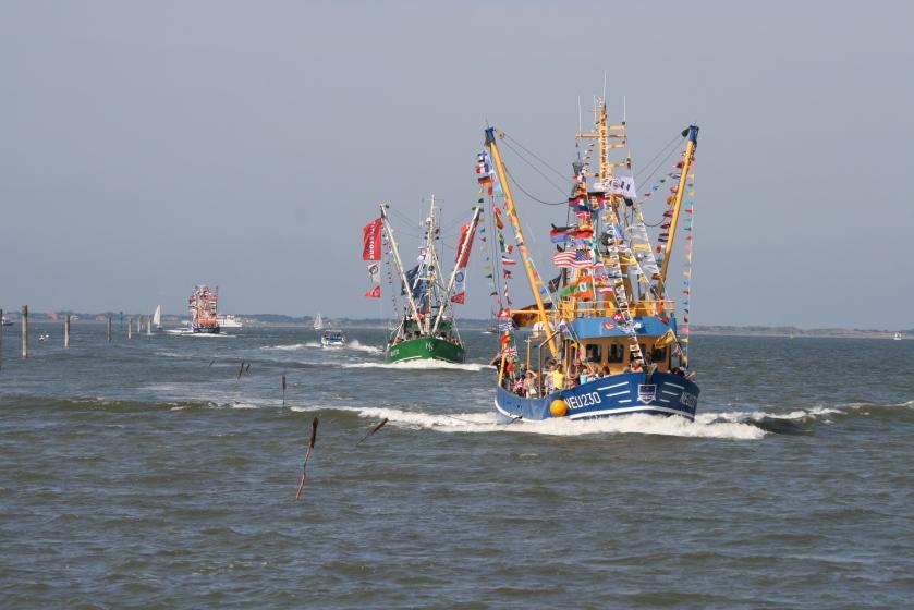 Bunt beflaggt: Die Krabbenkutter bei der traditionellen Regatta in Neuharlingersiel. Foto (c): Kurverein Neuharlingersiel