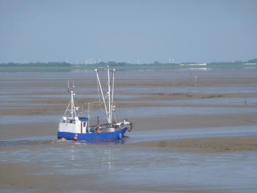 Bei Niedrigwasser fährt ein Krabbenkutter von Varelerhafen durch die wasserführende Priele in den Jadebusen hinaus. Fangfahrt im Sommer. Foto: Helmut Burlager